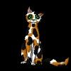 abbyferguson16 - Shinycatz breeder