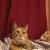 kittyheadquarters