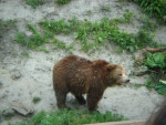 Bear ours -  (Has just been born)