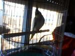 Bird LISA - Female (1 year)