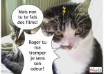 Cat chatoner -   (Has just been born)