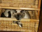 Cat  -   (Has just been born)