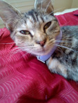 Cat Autumn -  Female (1 year)