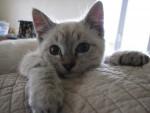 Polie - (4 months)