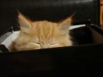 Mignonnes oreilles - (6 months)