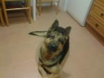 Yirka - Dog (2 years)