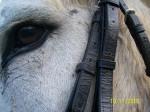 Topsy - Donkey (11 years)