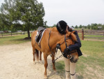 Beauford - Male Pony (12 years)