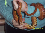 Slim - Snake (5 years)
